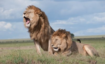 artificial intelligence in wildlife restoration